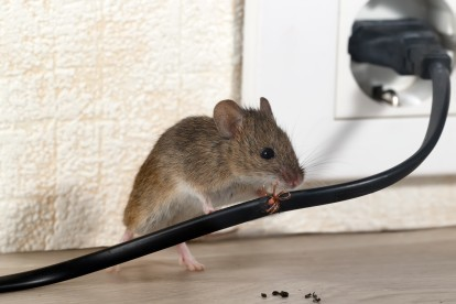 Pest Control in Crouch End, N8. Call Now! 020 8166 9746