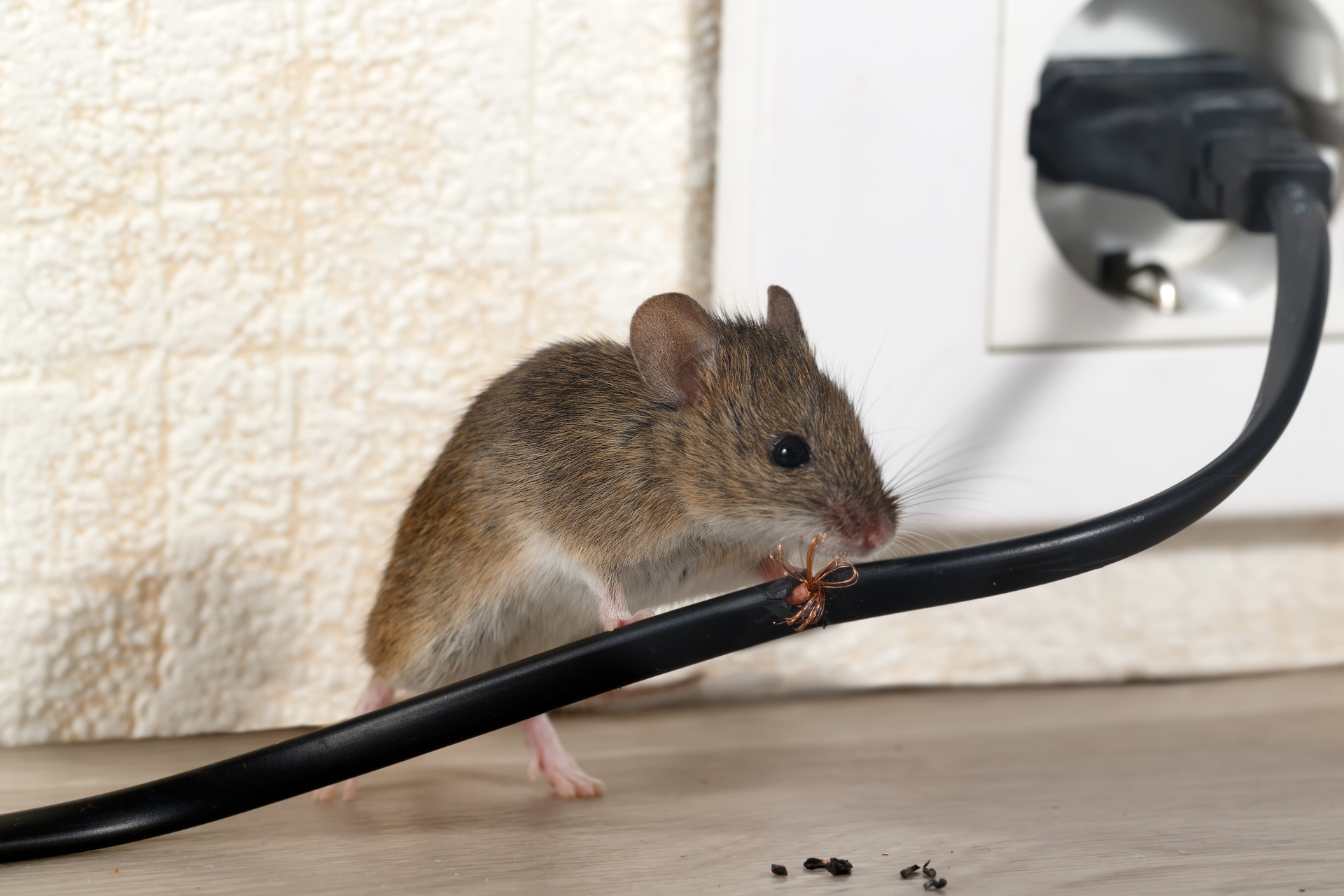 Mice Infestation, Pest Control in Crouch End, N8. Call Now 020 8166 9746