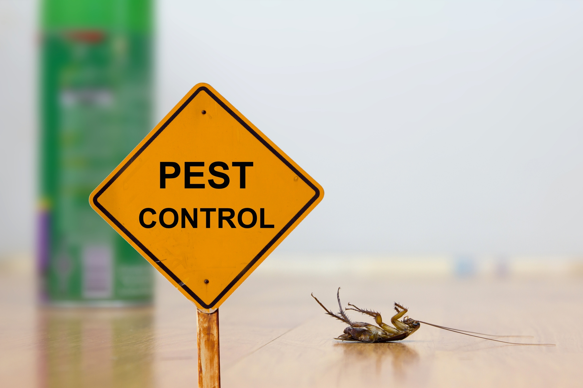 24 Hour Pest Control, Pest Control in Crouch End, N8. Call Now 020 8166 9746