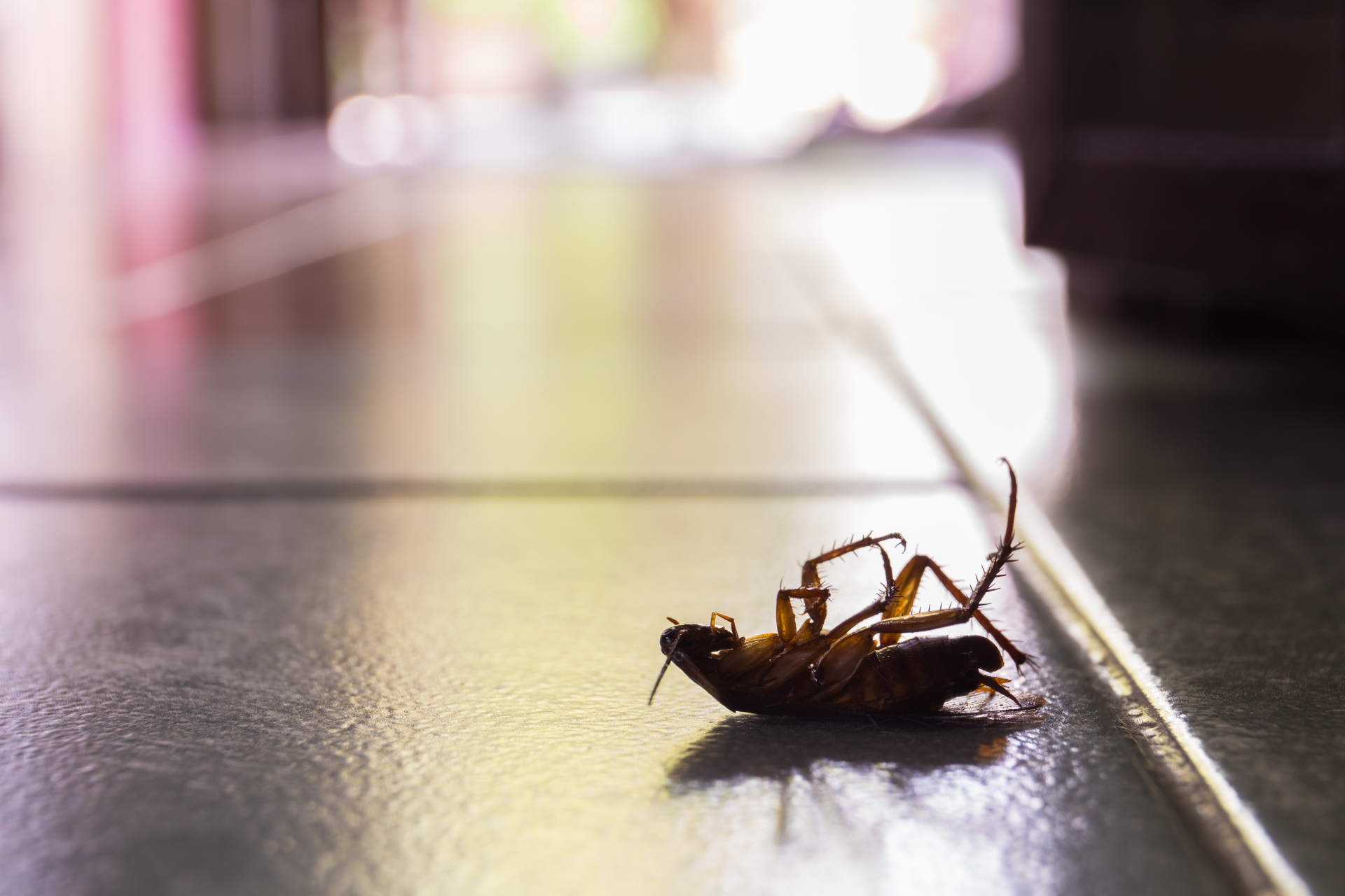 Cockroach Control, Pest Control in Crouch End, N8. Call Now 020 8166 9746